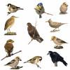 Diverse vogelartikelen